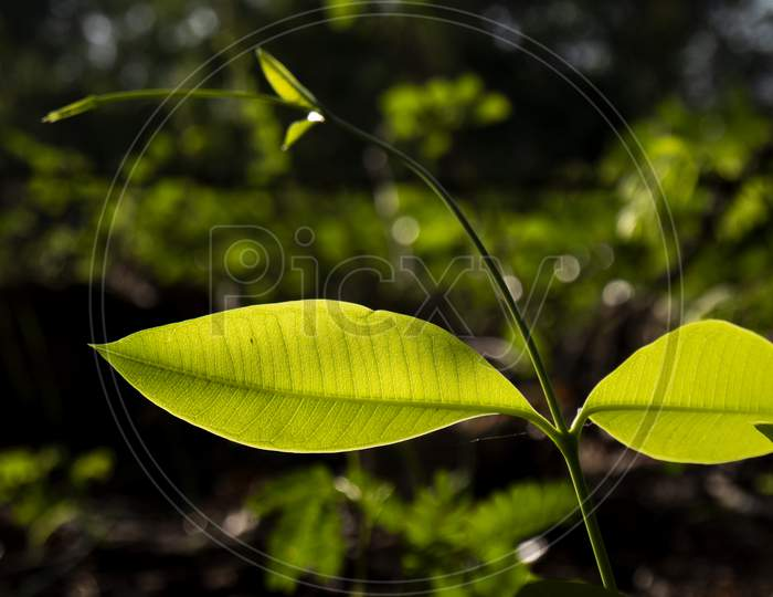 Closeup View Of Green Leaves With Bokeh Background