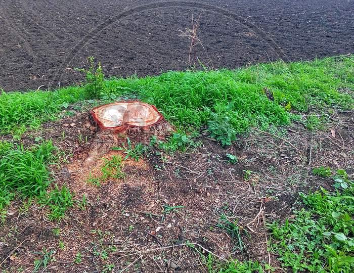 cut down of tree