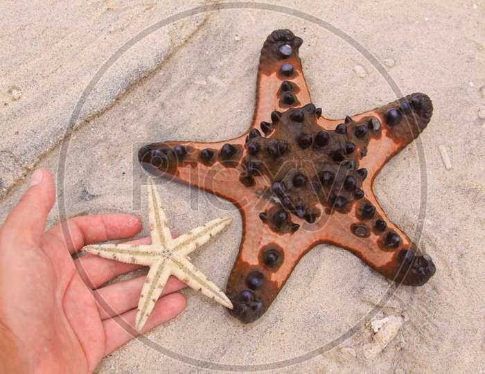 Two Sea Stars And Hand On Tropical Sandy Beach