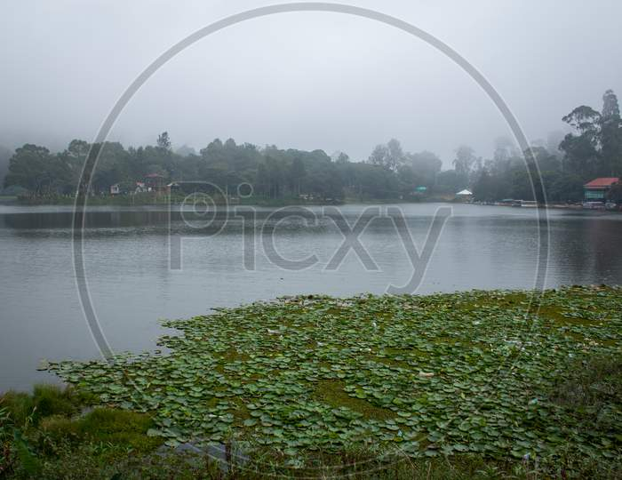 Scenic Yercaud Lake In A Hill Station Near Salem, Tamil Nadu, India