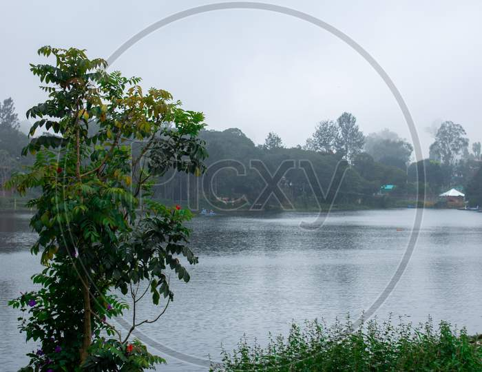 Scenic View Of A Tree And Yercaud Lake In Background Which Is One Of The Largest Lakes In Tamil Nadu. India