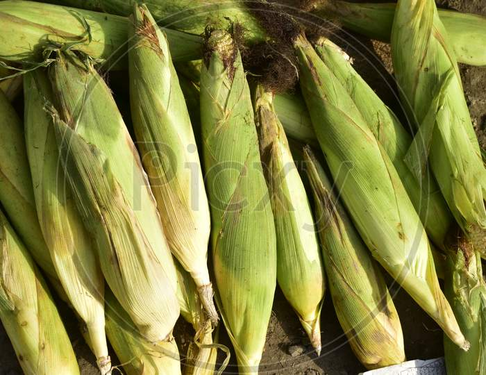 Corn For Sale At India.