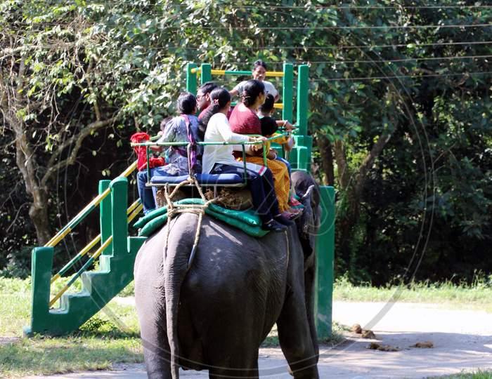 Visitors exploring a Zoo on an Elephant / Elephant Ride