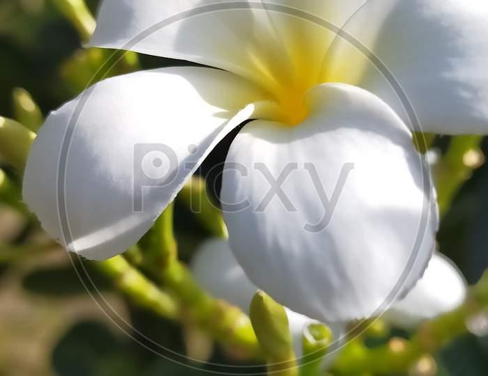 Beautiful white yellow flower