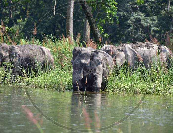 A Herd Of Wild Elephant  Takes Shelter At A Higher Land, Following Flooding At Kaziranga National Park  In Nagaon District Of Assam Tuesday, June 30, 2020.