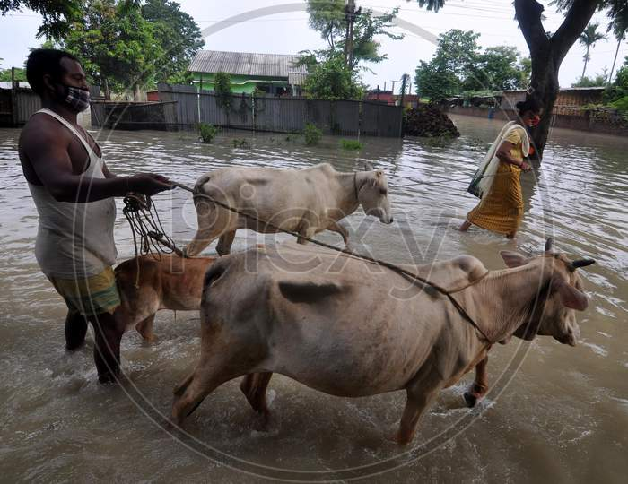 Villagers move their cattle to a safer place from the flood-affected regions in Hatisela district in Kamrup, Assam on July 14, 2020