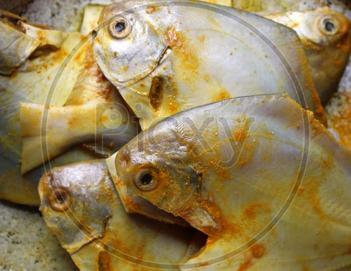 Close view of sea fish 'Pomfret'.  Fresh raw sea fish ready to cook