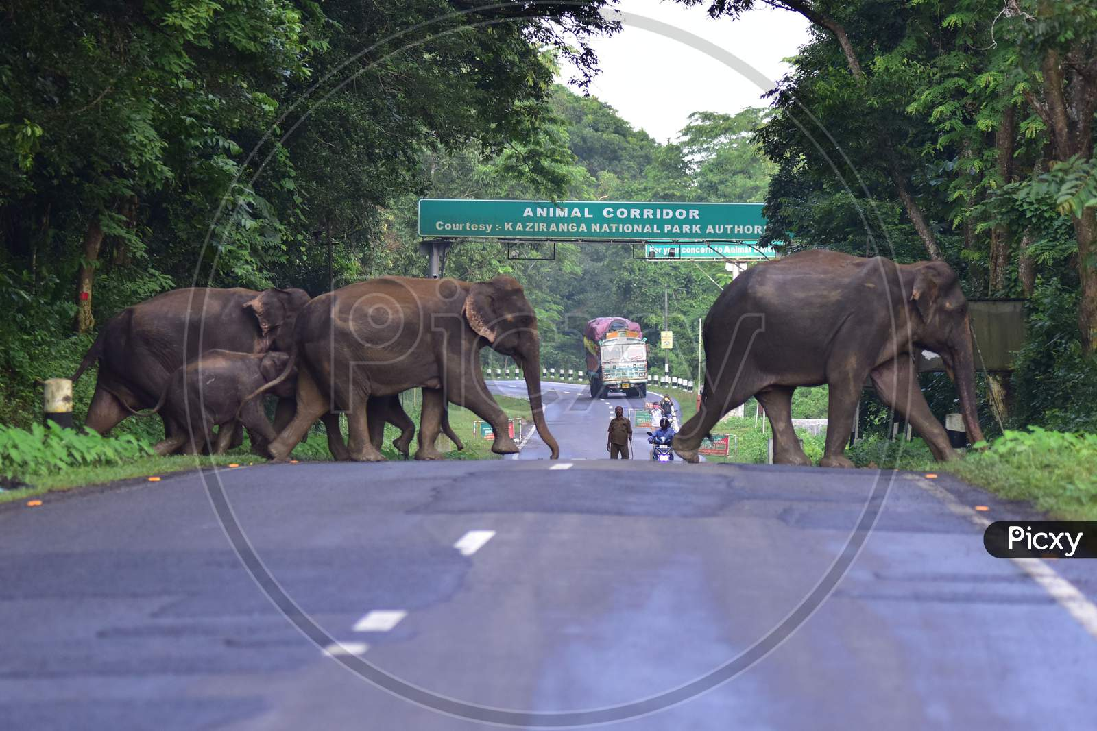 A herd of elephants crosses a National Highway to escape the floods in the Kaziranga National park in Nagaon, Assam on July 16, 2020