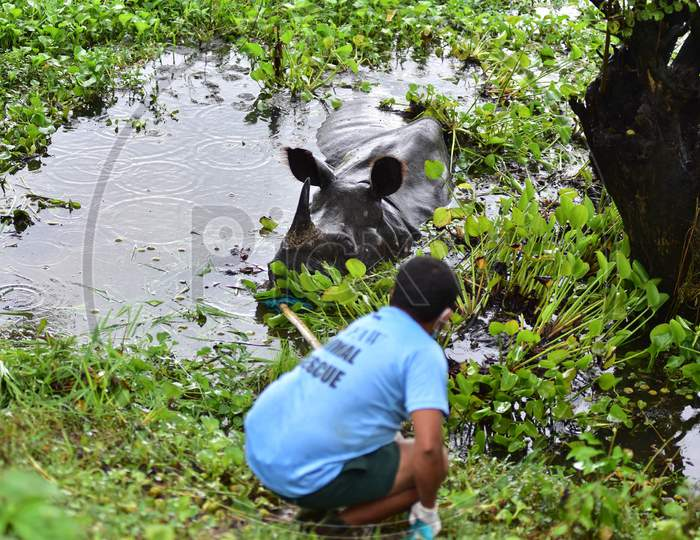 Forest officials try to feed a rhino who is resting near National Highway 37 after it strayed out of the flood-affected Kaziranga National Park in Nagaon, Assam on July 18, 2020