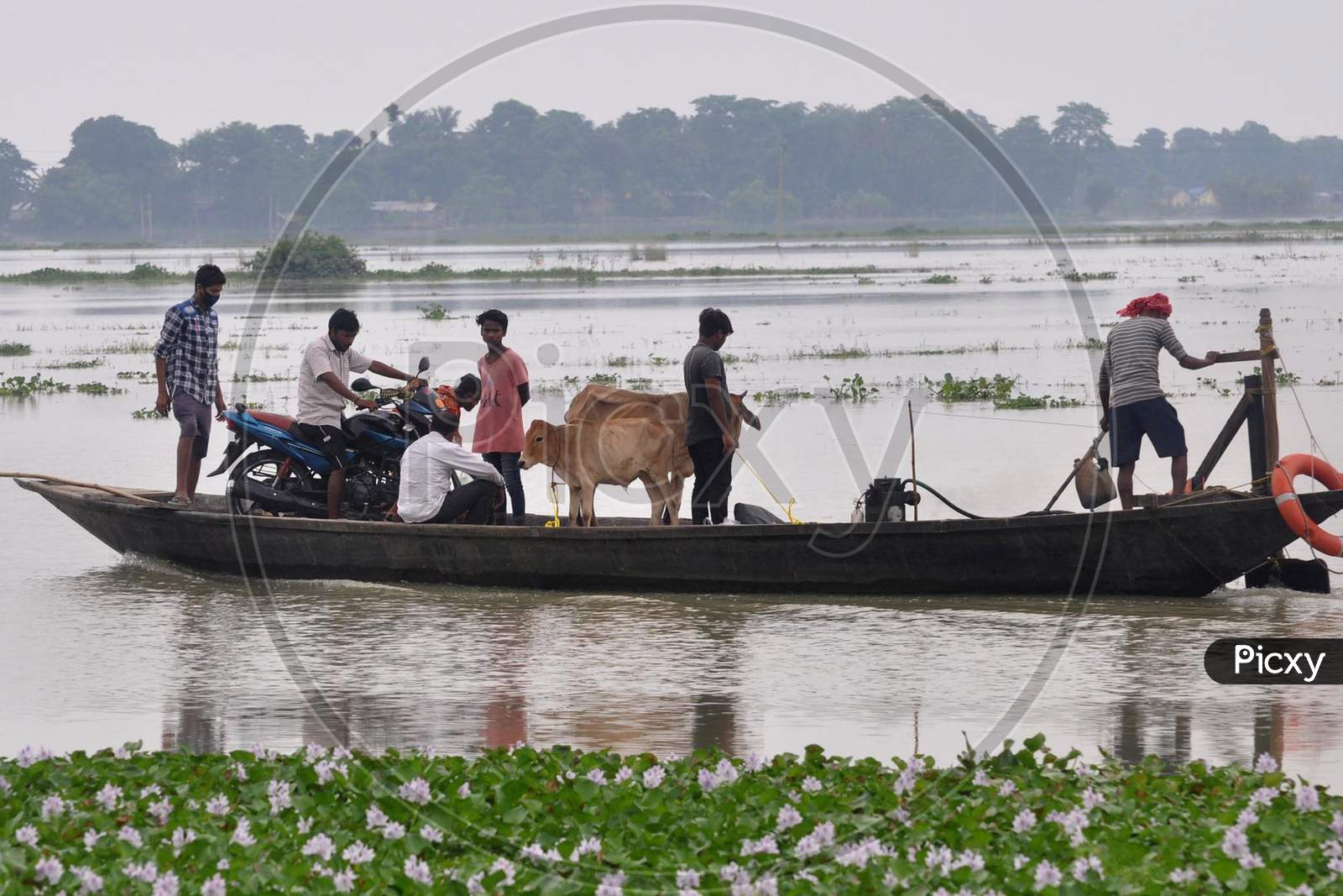 Villagers Along With Their Cattle Move Across A Flood Affected Area On A Boat, In Morigaon District In The Northeastern State Of Assam on July 26,2020.