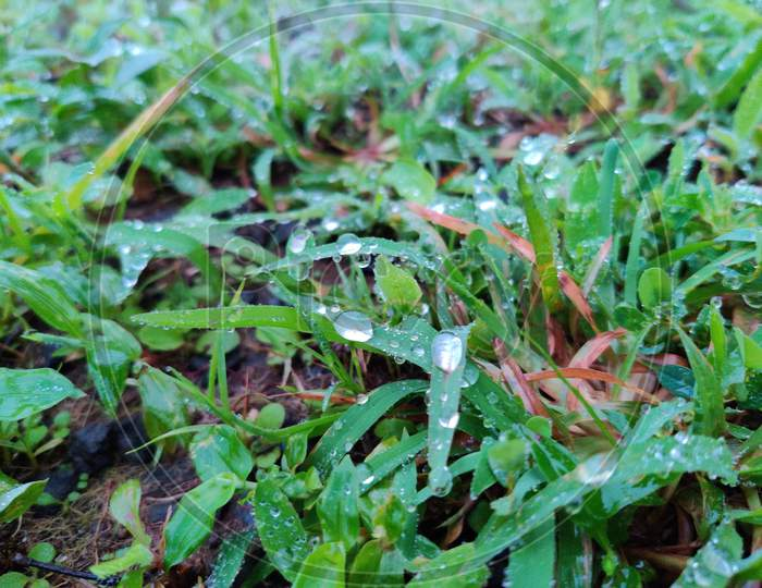 Grass water droplet