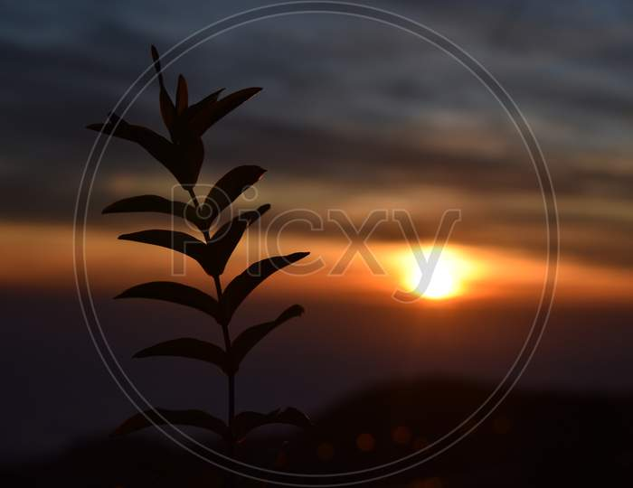 Beautiful Picture Of Plant And Sunset Background