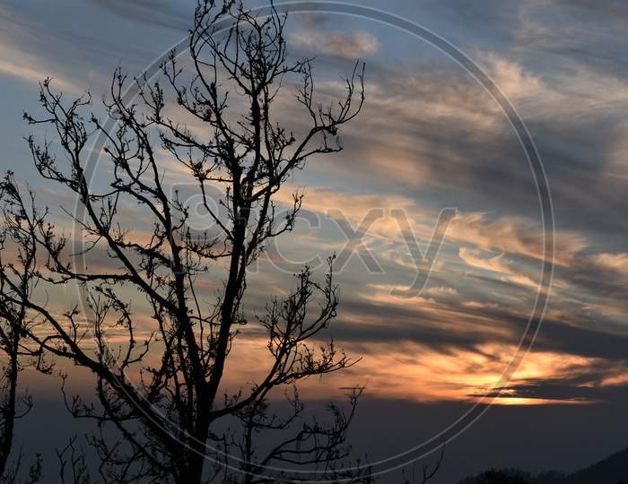 Beautiful Picture Of Sunset And Tree