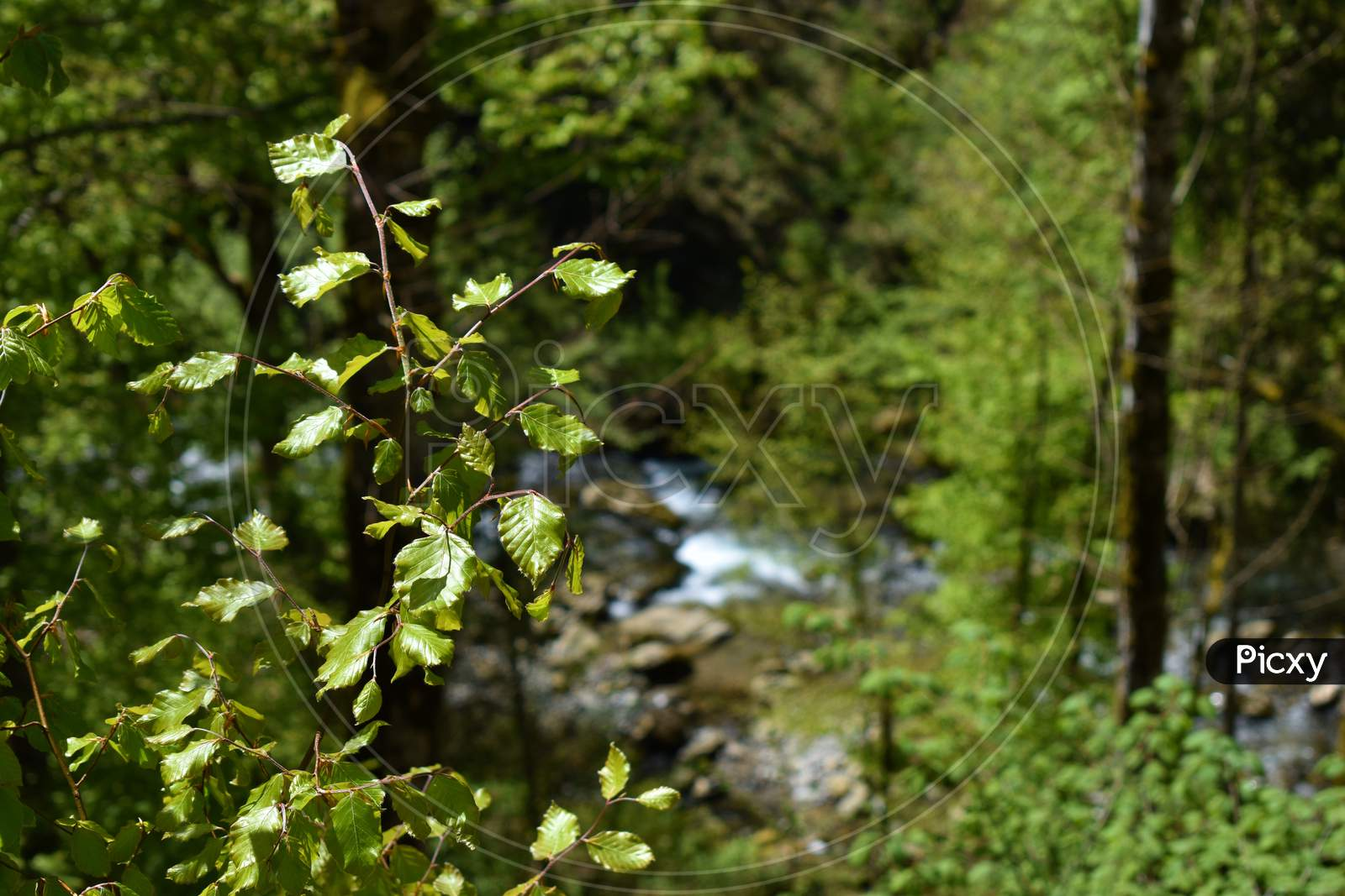 Spot into a forest in Appenzell Switzerland 7.5.2020