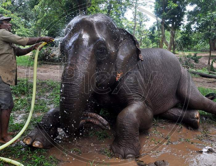 A Zookeeper Sprinkles Water On An Elephant As Mercury Rises In The City, At Assam State Zoo In Guwahati, Monday, Aug. 10, 2020.
