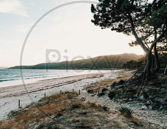 Horizontal View Of The Beach From The Forest
