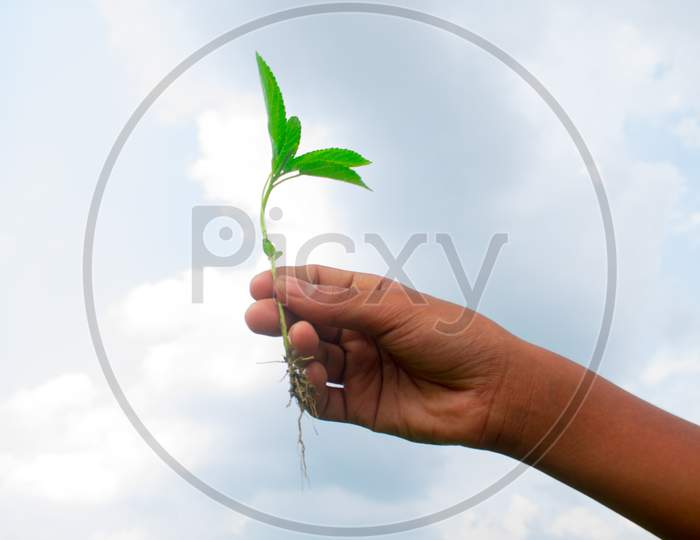 The child's hand is growing to save nature. Touch of nature in the gentle hand of the child.