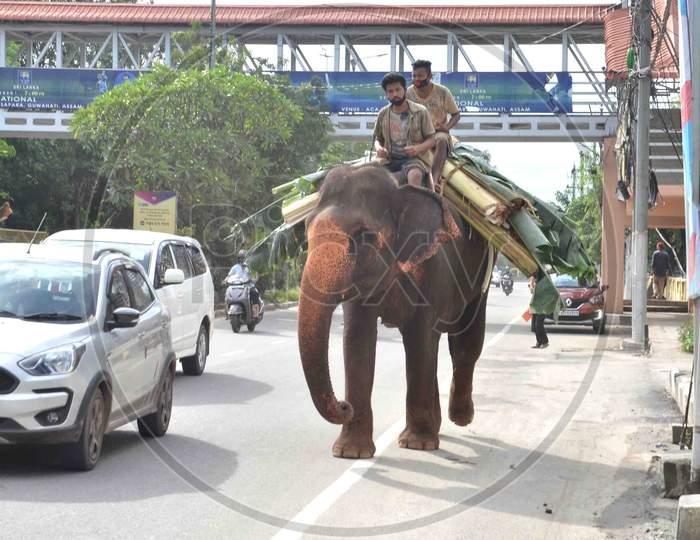 An Elephant carrying Banana tree
