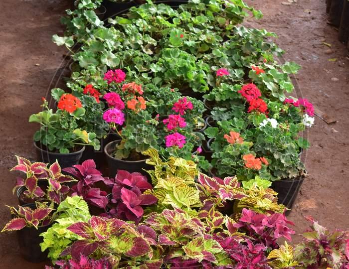 Plants And Flowers Nursery