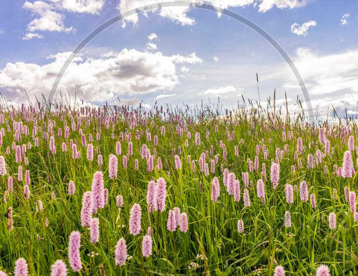 Flowers on the green grass meadow
