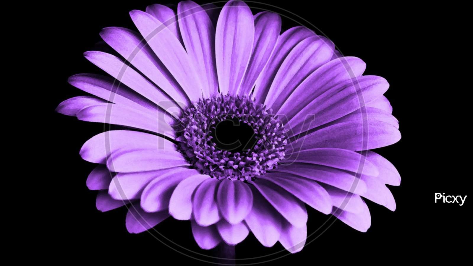 Image Of Nice Flower Purple Flower Ot155148 Picxy