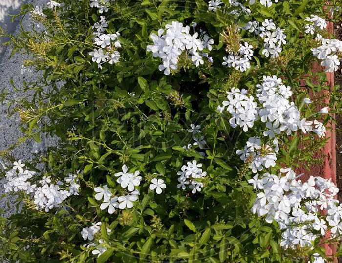 the beautiful flower