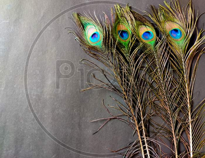 Four Full Sized Elegant Peacock Feathers Isolated On Black Background. Copy Space