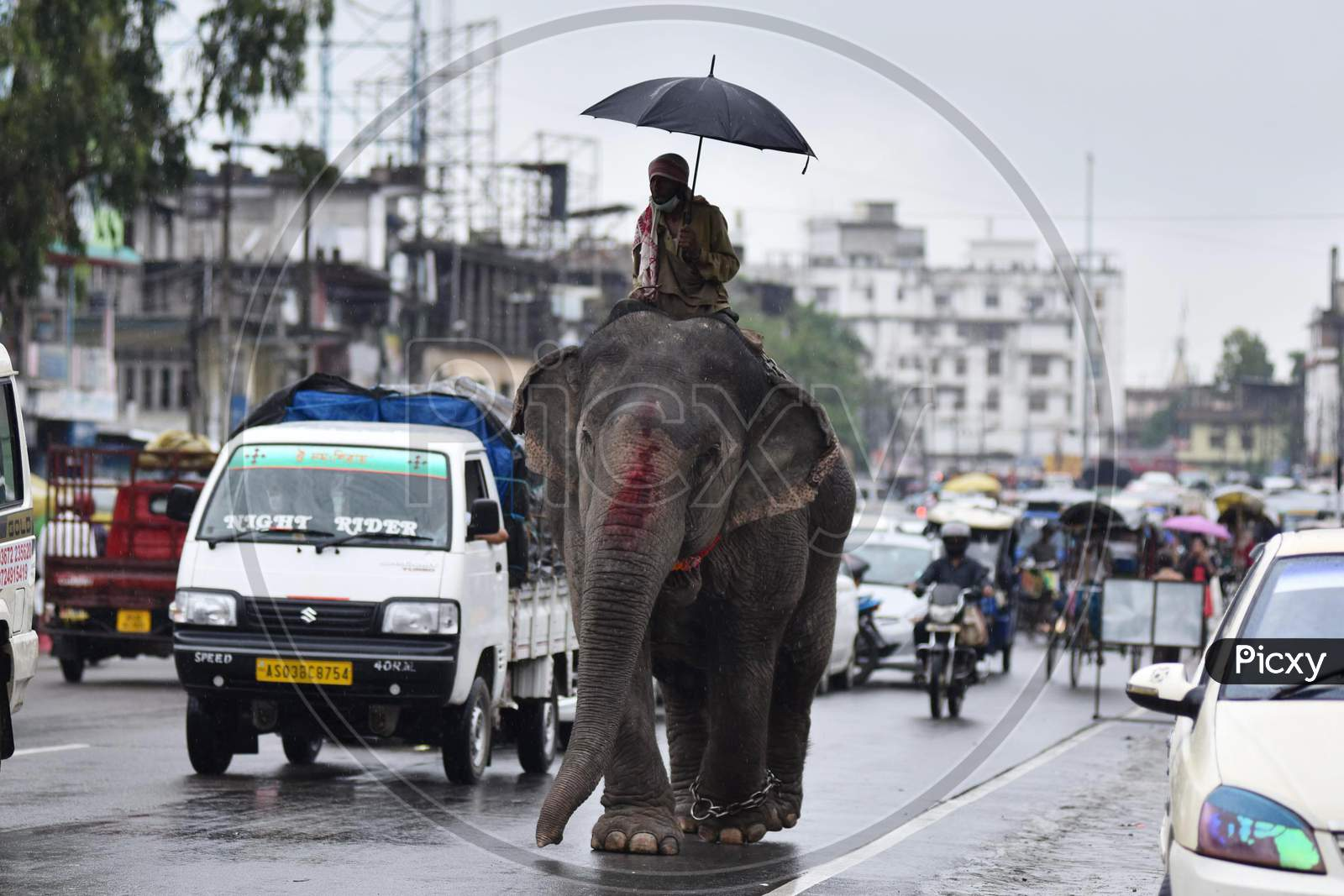 An elephant and its keeper move through rains on a street in Nagaon District of Assam on September 14, 2020