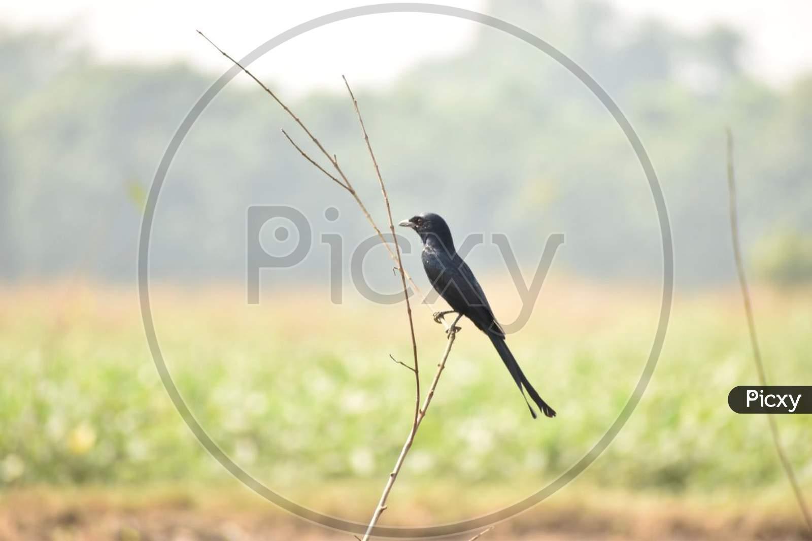 A beautiful perching bird