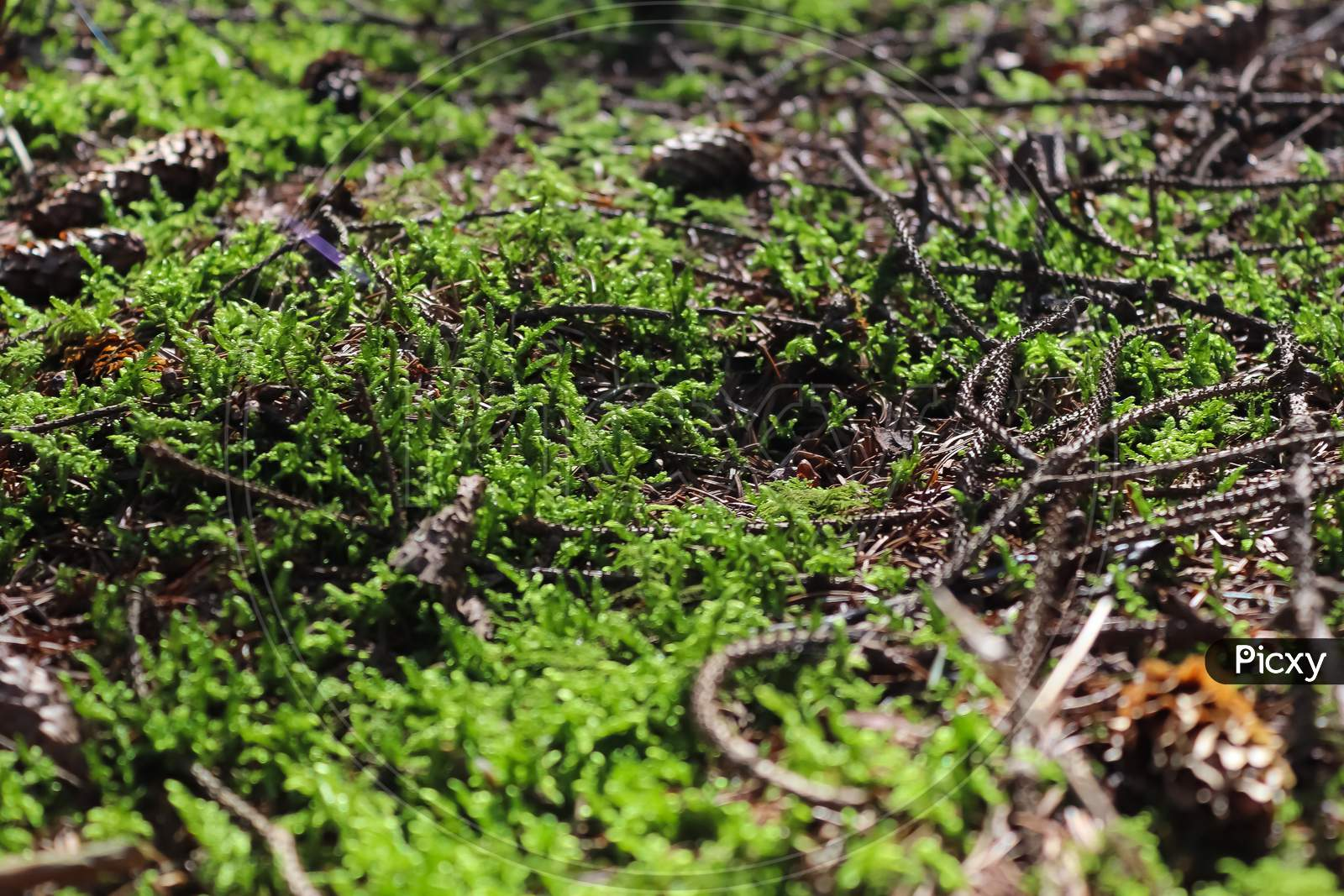 Detailed Close Up View On A Forest Ground Texture With Moss And Branches
