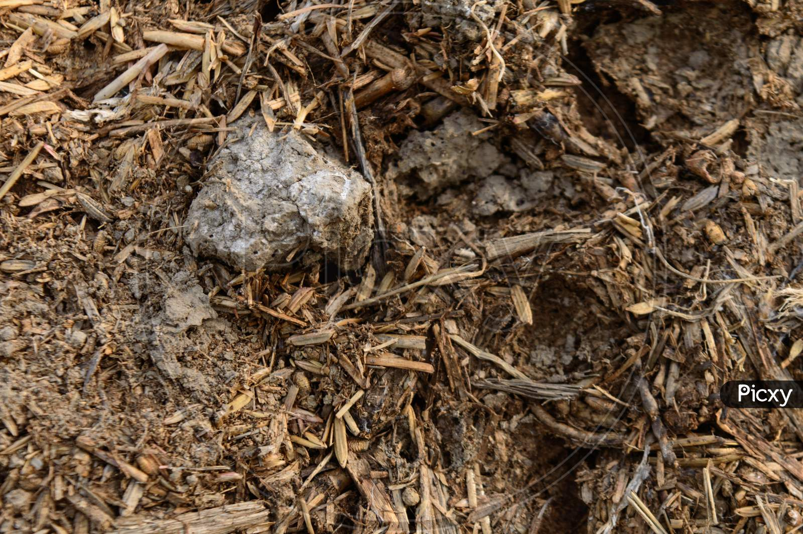 Closeup Micro Shot Of Indian Cow Dunk With Soil.