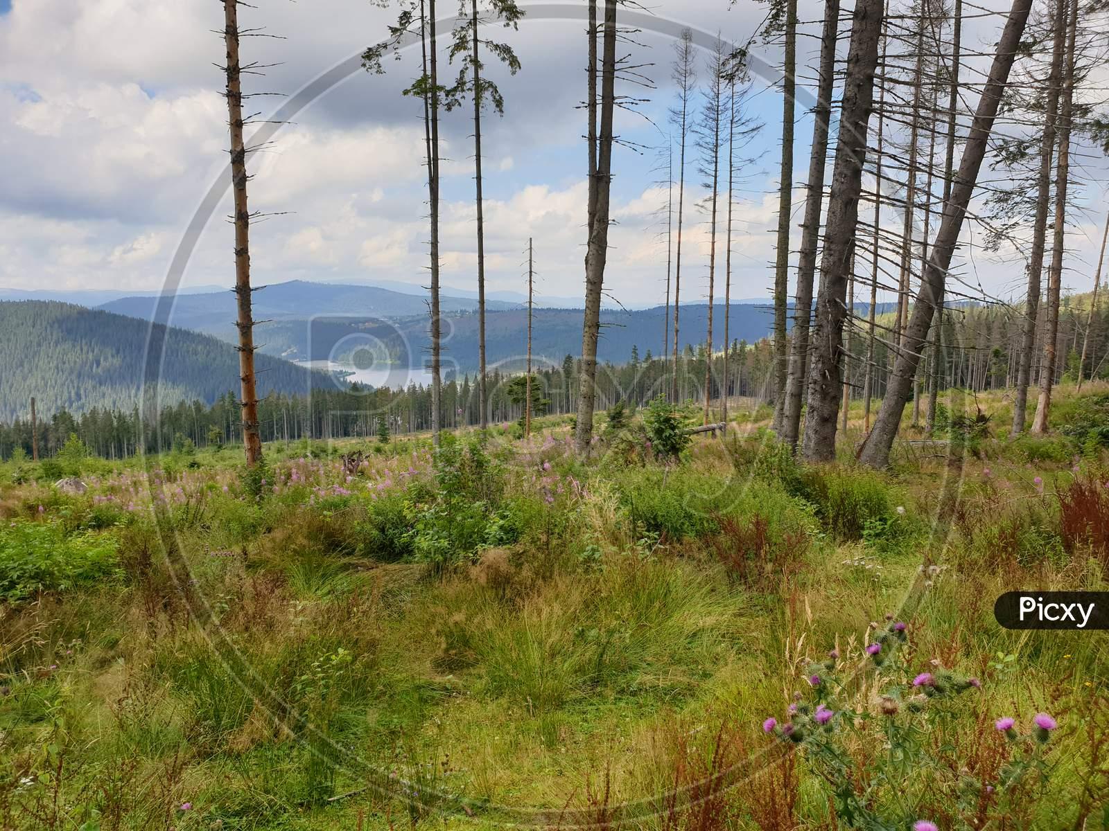 Environmental Issue In Apuseni Mountains, Romania