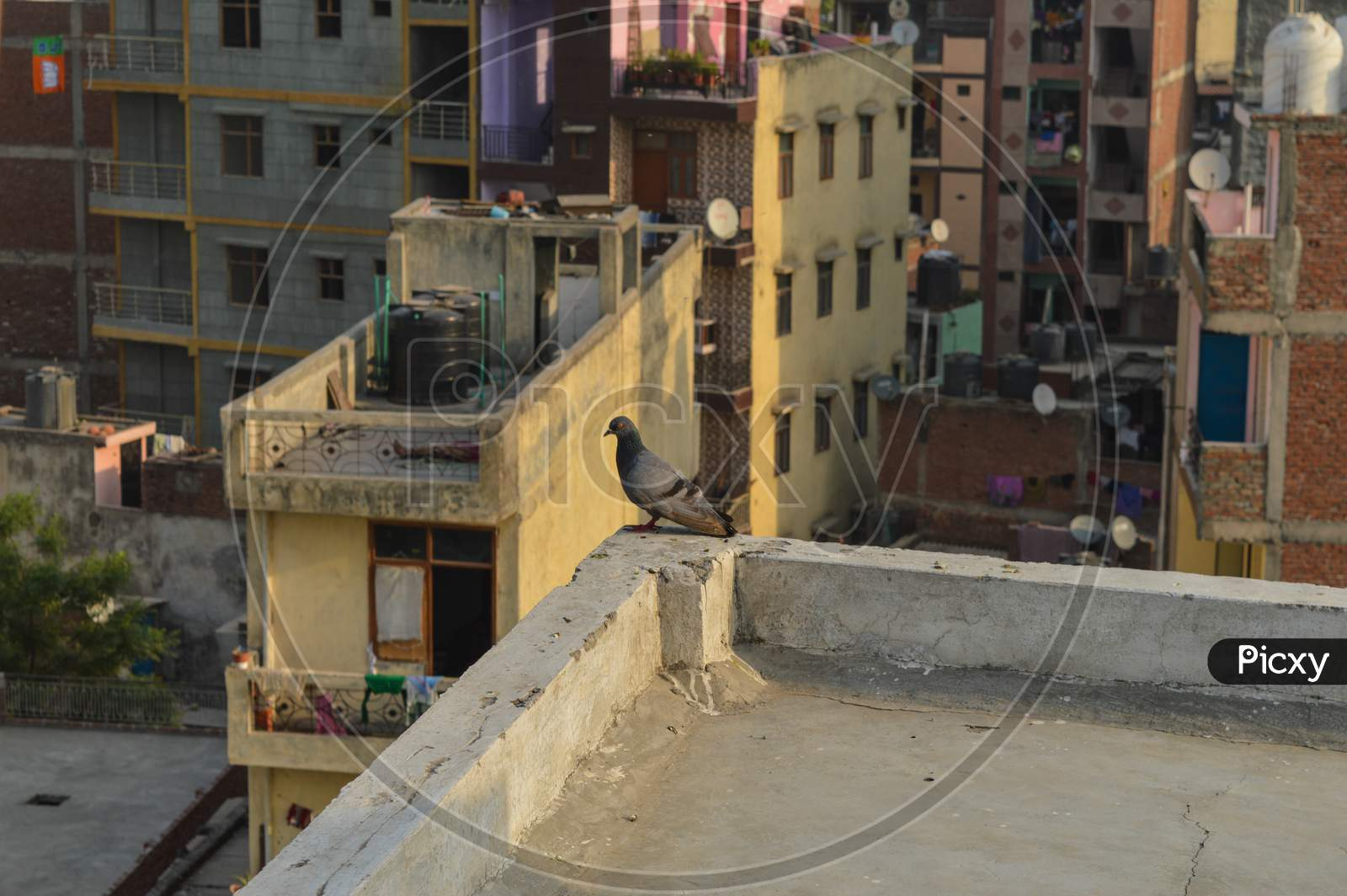 A Pigeon Decided To Leave His Nest Because Of People Cutting Down The Trees And Making Polluted City.