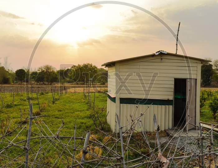 A Beautiful Landscape Evening View Of Hut And Field Of Pomegranate And Apple Plumb At Indian Village.