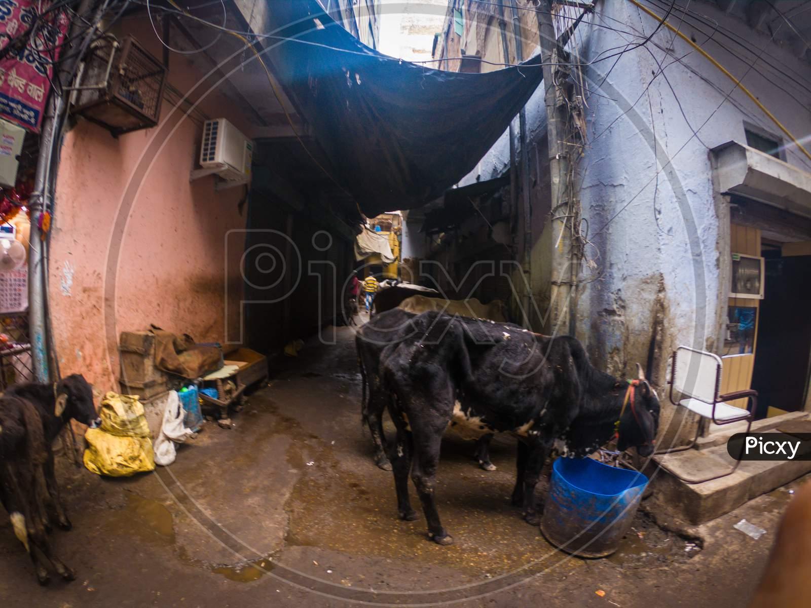 Purani Delhi Street And Market Or Shops Chandni Chowk