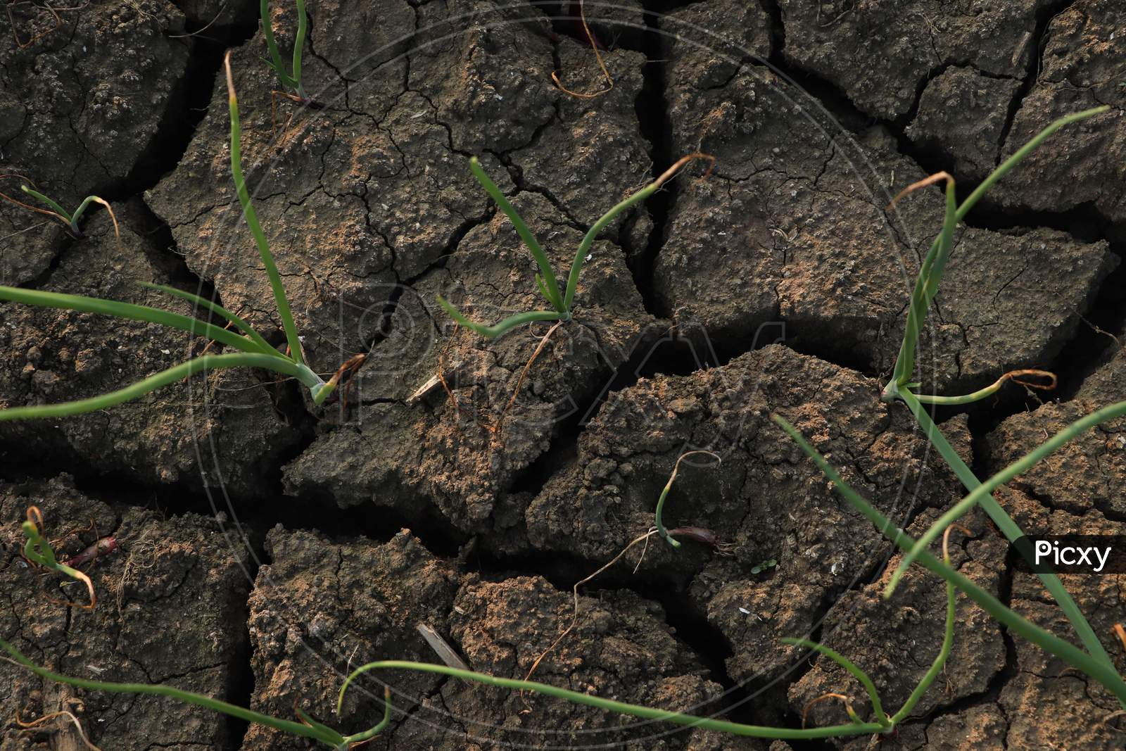 Soil With Crack Stock Photo