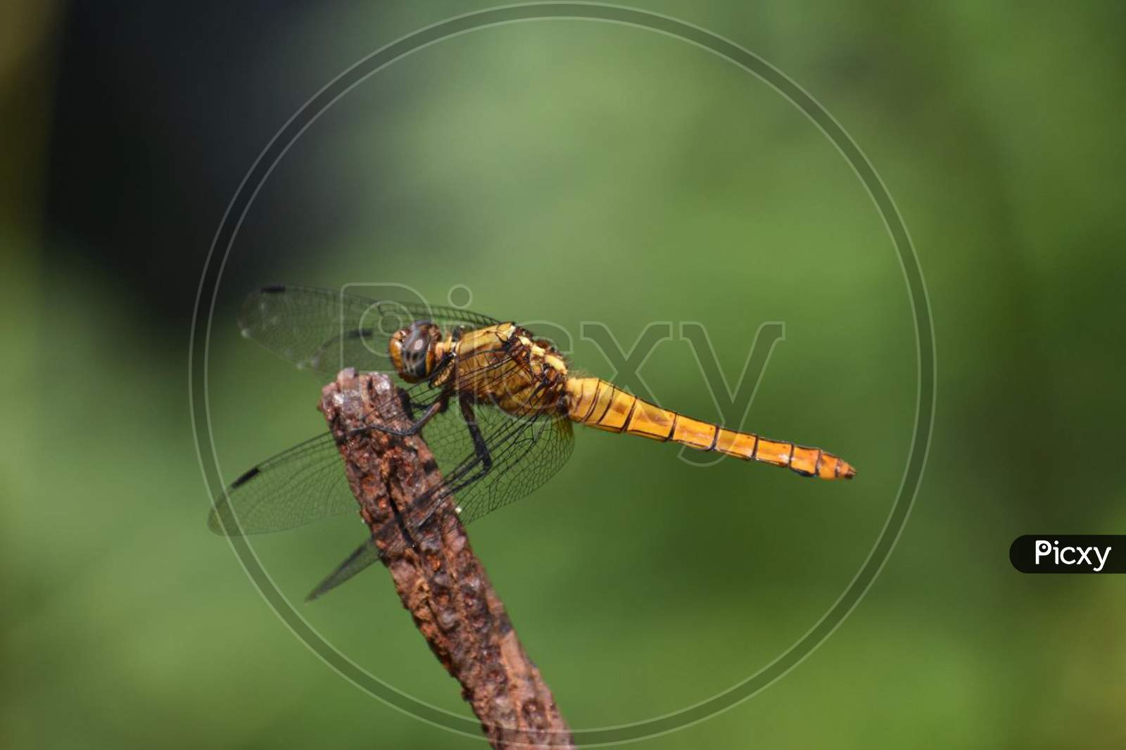 A beautiful dragonfly.