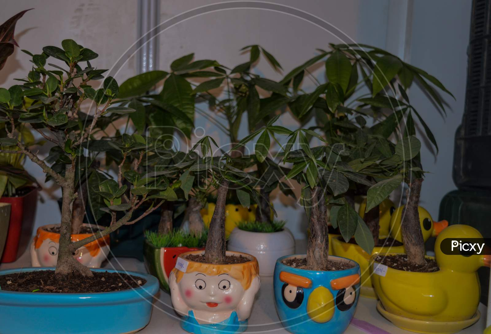 A Group Of Plants For Sale At Stall In Cute Pot.