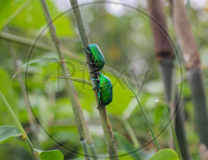 green insect, beatyful insect love for valentine's day images background