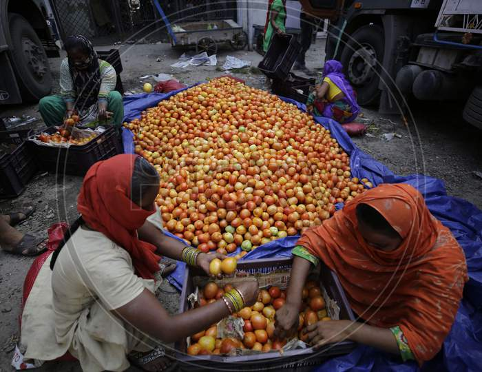 Workers sort tomatos at Narwal vegetable wholesale market on the outskirts of Jammu on September 17,2020.,Tomatos prices are skyrocketing retail rate touching Rupees 70-80per kilogram.