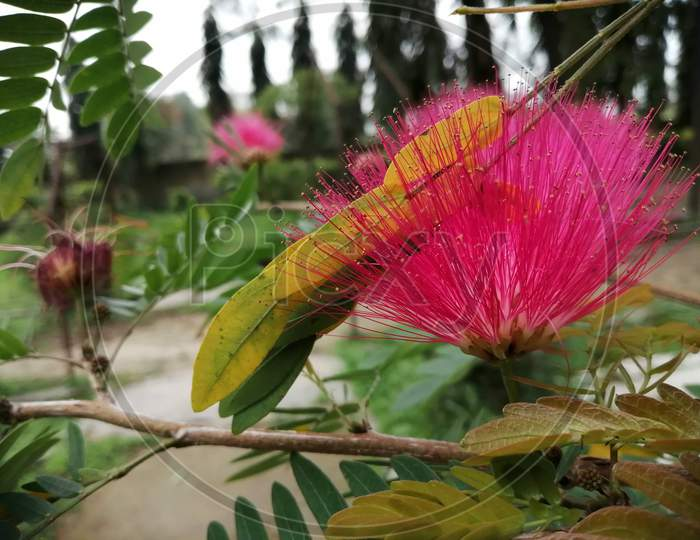 Beautiful flower with branches
