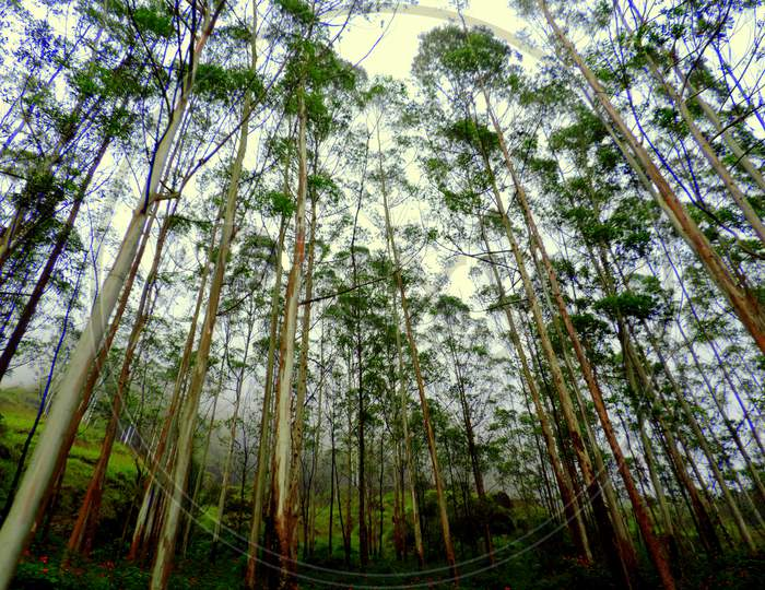 Woody plant forest