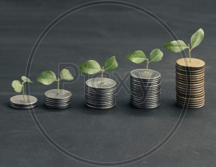 Growing Plant On Stack Money With Black Background. Business Finance Concept