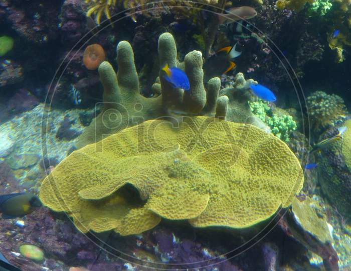 Marine Life Park, Sentosa, Singapore