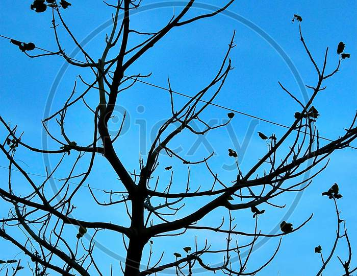 Silhouette of tree branches without leafs on blue sky.