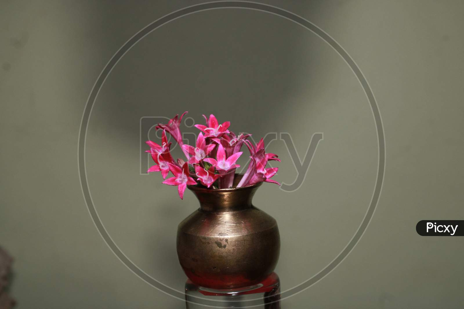 Beautiful Red flower in tiny Vase