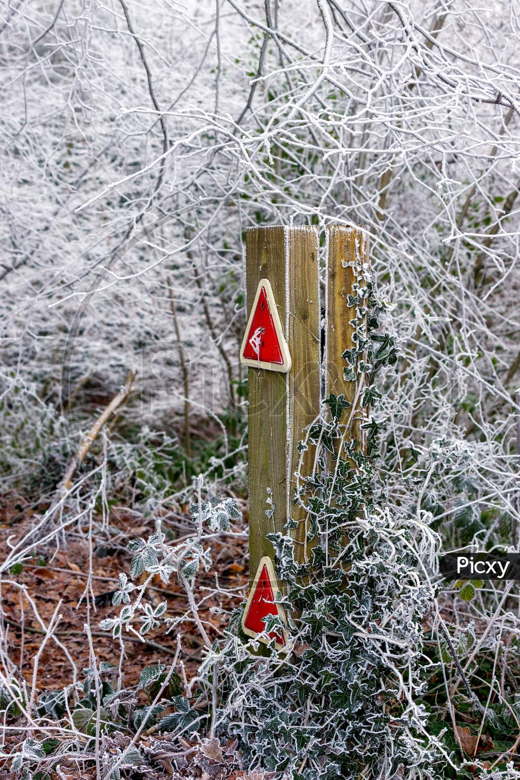 Wooden Post With Traffic Reflectors Covered In Ivy And Hoar Frost