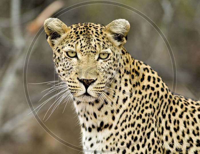 Beautiful pictures of  Kruger