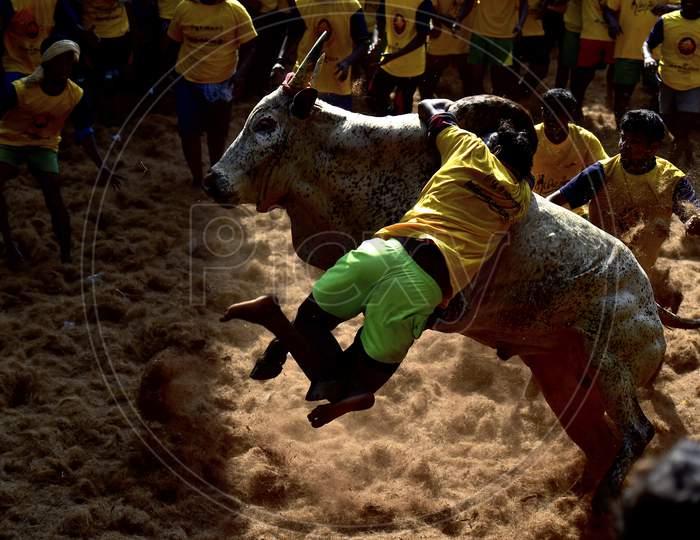 Pongal Festivals