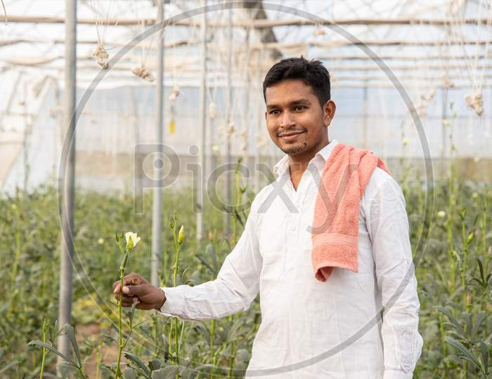 Young Indian Farmer Smiling While Holding Plant Crop At His Poly House Or Greenhouse, Agriculture Business And Rural Prosperity Concept. Man Wearing White Cloths, Copy Space